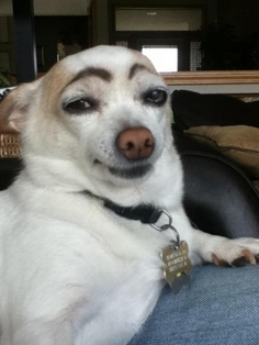 Dog eyebrows - 5