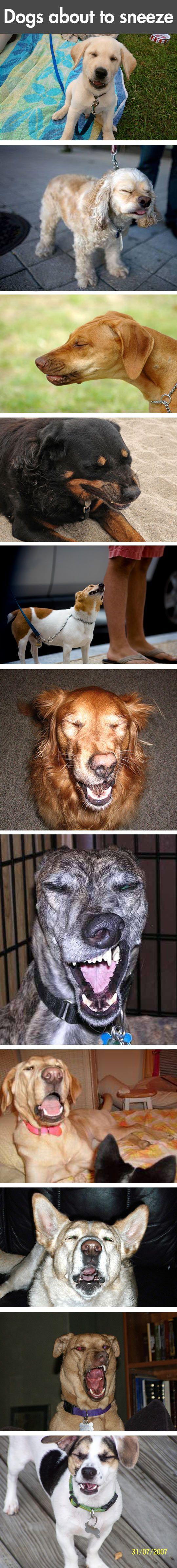 Dogs sneeze - 3